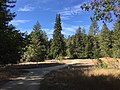 Crown Meadow UC Santa Cruz.jpg