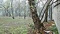 Csajkovszkij park6.jpg