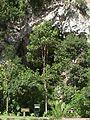 Cueva del Guacharo 09.jpg