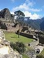 Cusco machupicchu arbol.jpg