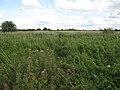 D'Engaynes Fen - geograph.org.uk - 1481642.jpg