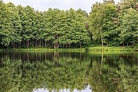 """Dülmen, Börnste, Naturschutzgebiet """"Franzosenbach"""" -- 2020 -- 7846.jpg"""