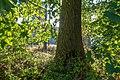 """Dülmen, Welte, Naturschutzgebiet """"Am Enteborn"""" -- 2018 -- 3556.jpg"""
