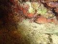 DSC00171 - peixes - Naufrágio e recifes de coral no Nilo.jpg