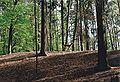Damhirsch im Tierpark Eberswalde.jpg