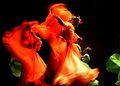 Danza tradicionalista.jpg