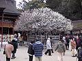 Dazaifu Tenmangu Plum Tree 2004-03-07.jpg