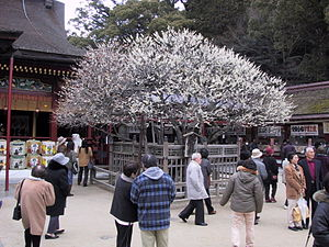 "Sugawara no Michizane - tobi-ume or the ""flying plum"" at Dazaifu Tenman-gū"