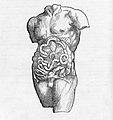 De humani corporis fabrica (Of the Structure of the Human Body) MET mm71294~1.jpg
