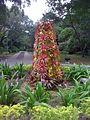 Deering Estate's tropical Christmas tree - panoramio.jpg