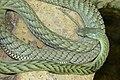 Dendroaspis viridis.jpg