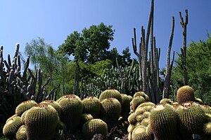Huntington Desert Garden - Image: Desert garden