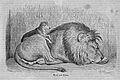 Die Gartenlaube (1863) b 284.jpg