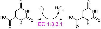 Dihydroorotate oxidase reaction.PNG