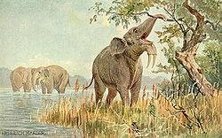 Dinotherium.jpg