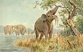 Deinotherium door Heinrich Harder