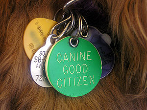 Canine Good Citizen dog tag.