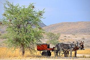 Donkey car, Namibia.jpg