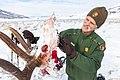 Doug Smith, senior wildlife biologist, examines the teeth of a wolf-killed bull elk (d44734e0-8551-4ad3-bca4-c088aba0681d).jpg