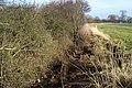 Drainage Ditch near Allerthorpe Hall - geograph.org.uk - 338199.jpg
