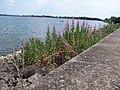 Draycote Water - geograph.org.uk - 347261.jpg