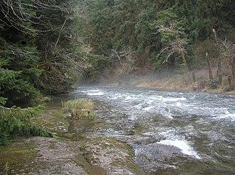 Drift Creek Wilderness - Drift Creek