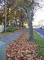 Drifting leaves, Bradley Road, Bradley, Huddersfield - geograph.org.uk - 281610.jpg