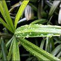 Droplets on leaves.jpg