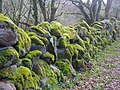 Dry stone wall covered in moss - geograph.org.uk - 1421069.jpg
