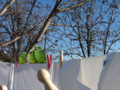 Drying parrots.png
