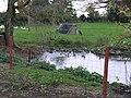 Duckpond in Shingleford Farm - geograph.org.uk - 74612.jpg