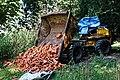 Dumper loader at Copped Hall, Epping, Essex, England.jpg