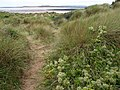 Dunes, Instow - geograph.org.uk - 941932.jpg