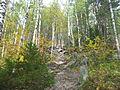 Dvuglavaya sopka vegetation1.jpg