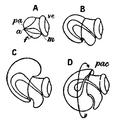 EB1911-Gastropoda 2.png