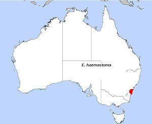 Eucalyptus haemastoma - Image: E haemastoma