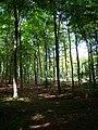 Eartham Wood - geograph.org.uk - 236530.jpg
