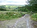 Eastern End to Sarn Helen Roman Road, Coed y Rhaiadr - geograph.org.uk - 917601.jpg