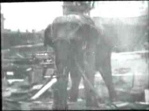 File:Edison - Electrocuting an Elephant.ogv