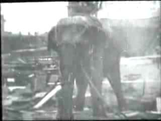 File:Edison - Electrocuting an Elephant.ogv