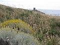 Elicriso (Columbargia) - panoramio.jpg