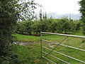 Entrance to an orchard - geograph.org.uk - 949748.jpg