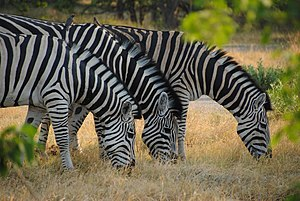 North-West District (Botswana) - Moremi Game Reserve