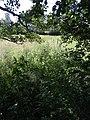 Erlenbach kommt zum Erlengraben R0015965.jpg