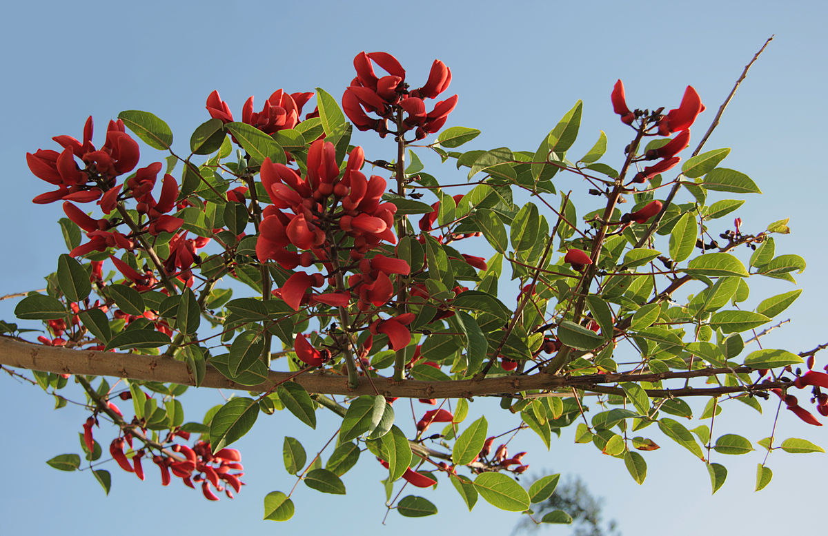sinhalese new year wikipedia