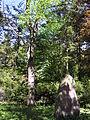 Esperanto-arbo en Olomouc – arbo kaj monumento.JPG