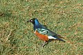 Ethiopia Bird 5.jpg