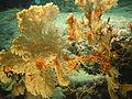 Expl0125 - Flickr - NOAA Photo Library.jpg