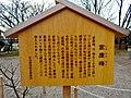 Explanation board about Prunus mume Ieyasubai.jpg