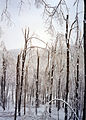FEMA - 21740 - Photograph by State Agency taken on 01-19-1998 in Vermont.jpg